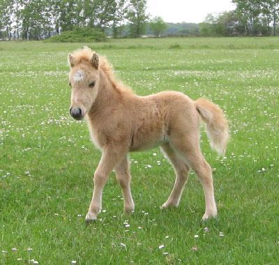 Les chevaux les animaux mignons - Des animaux trop mignon ...